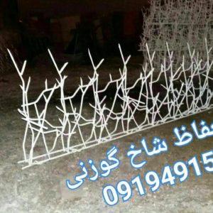 حفاظ شاخ گوزنی